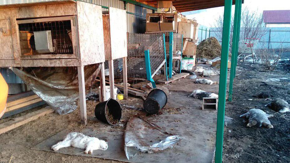 Под Воронежем неизвестное животное убило 55 кроликов