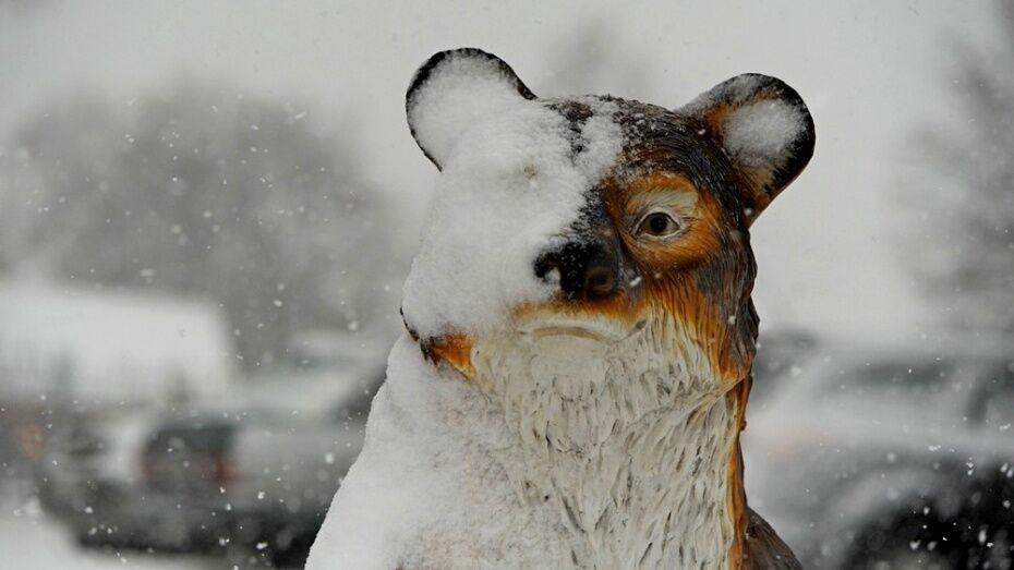 В Воронежской области из-за мокрого снега и гололеда объявили желтый уровень опасности