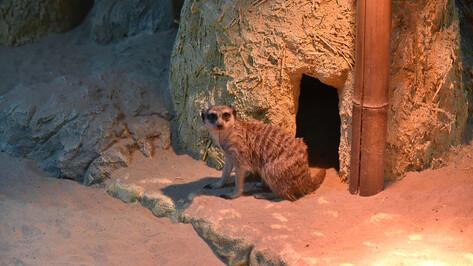 Новый зал Воронежского зоопарка назовут «Джуманджи»