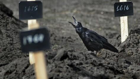 Опрос РИА «Воронеж». Как горожане отнесутся к строительству крематория