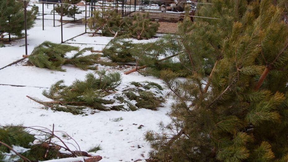 В Воронеже на улице Переверткина неизвестный зарезал продавца елок