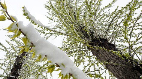 Главный метеоролог Воронежской области: «Погода станет весенней после 28 апреля»