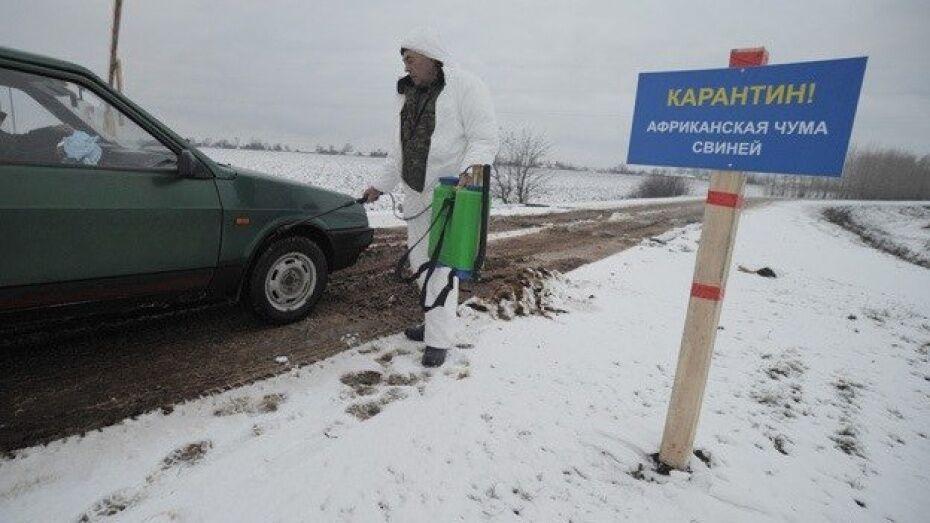 В Воронежской области началась ликвидация второго очага АЧС