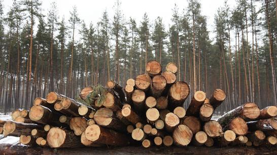 Закрывшего глаза на незаконную рубку леса воронежского чиновника обвинили в коррупции