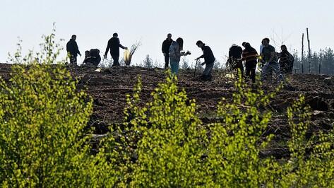 Жители Воронежской области посадили 708 тыс деревьев в ходе акции «Лес Победы»