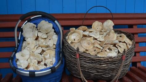 Нижедевидцы собрали в мае рекордный за 30 лет урожай грибов