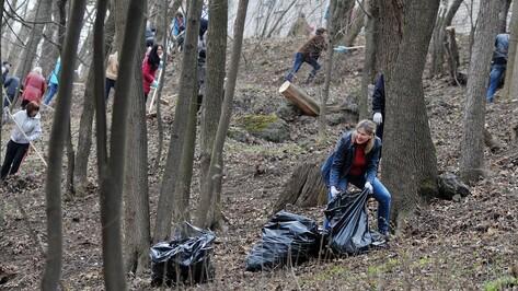 В Воронежской области за год очистили от мусора 330 га леса