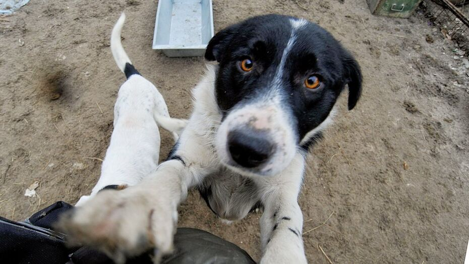 Брижит Бардо попросила воронежского губернатора вступиться за бездомных животных