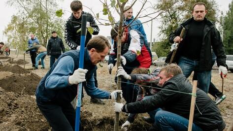На субботнике в воронежском сквере «Чайка» посадили 300 кустарников и 32 дерева