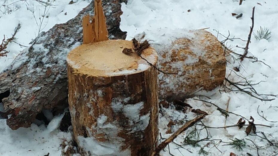 Воронежцы сообщили о вырубке леса в микрорайоне Тепличном