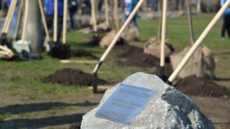 На Петровской набережной в Воронеже высадили 85 рябин