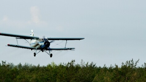 В Воронежской области закончена авиационная обработка лесов от вредителей