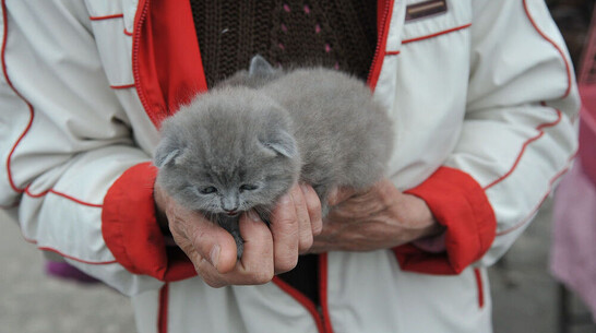 В Павловске ввели карантин по бешенству из-за котенка