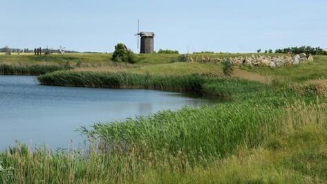 В Ломовском парке в Воронежской области высадят 2 тыс сосен