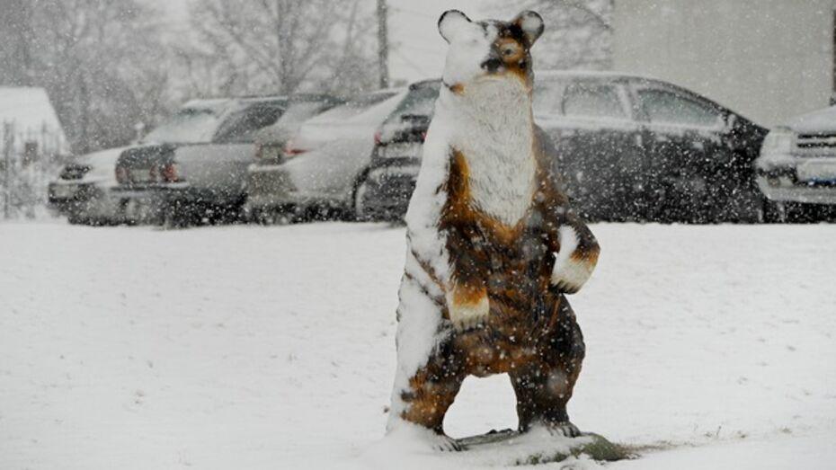 До конца марта потепления в Воронеже и области не ожидается