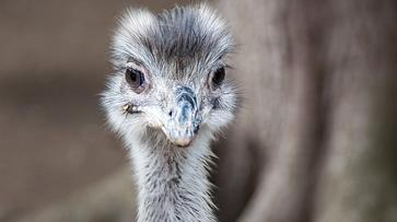 Эму и какаду. Каких редких птиц лишился из-за эпидемии Воронежский зоопарк