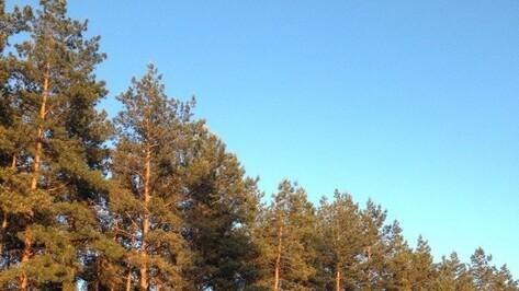 В Россошанском районе создадут пункт видеонаблюдения за лесами