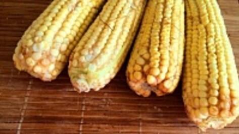 Под Воронежем построят завод по переработке кукурузы