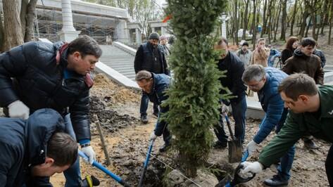 В воронежском Центральном парке появилось 26 сербских елей