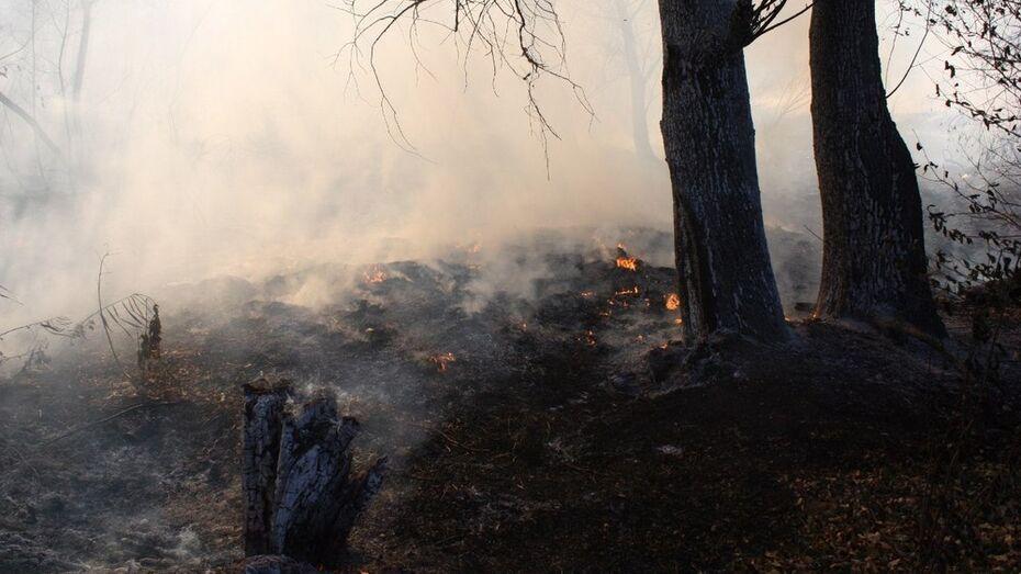 Рамонские дачники спровоцировали в выходные 4 пожара