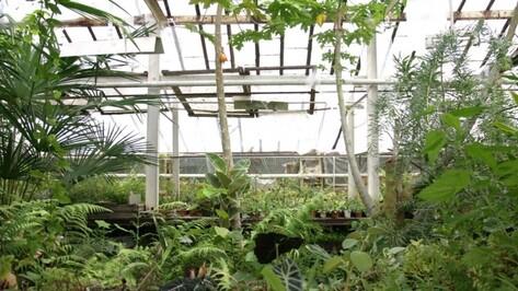 Руководство вуза планирует устранить экологические проблемы Ботанического сада ВГУ
