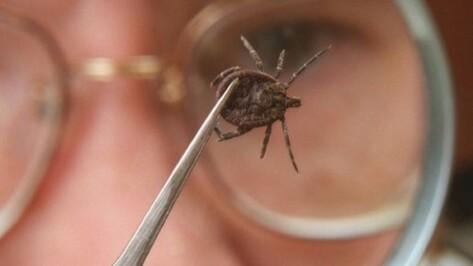 В этом году клещи и комары кусали воронежцев реже, чем в прошлом
