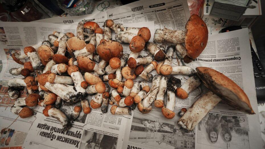 В Воронежской области 51 человек отравился грибами в 2017 году