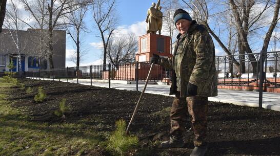 Житель кантемировского села Шевченково высадил у братской могилы 28 сосен