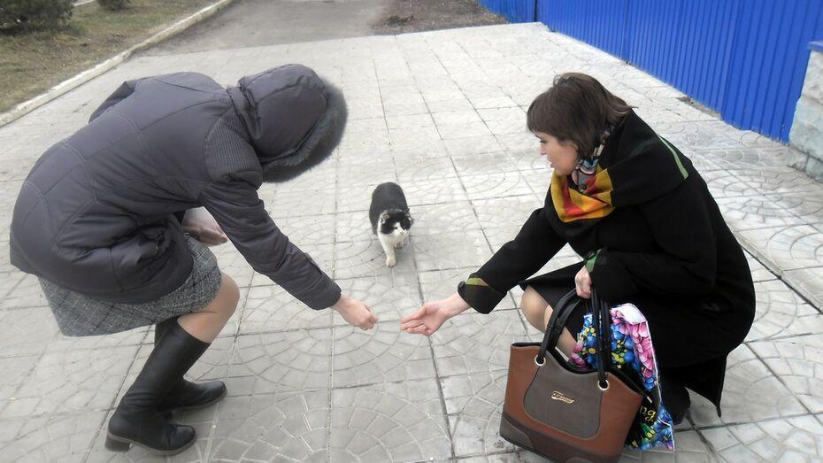 В поселке Подгоренский бездомным котам скормили 5 кг сосисок