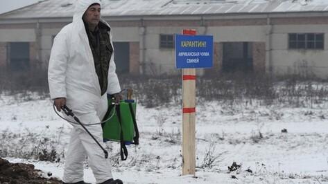 На нижнедевицком свинокомплексе дезинфицируют оборудование после ликвидации очага АЧС