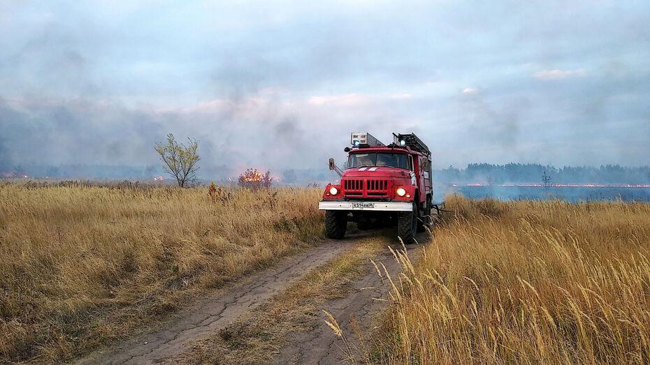 Крупный природный пожар потушили в Воронежской области