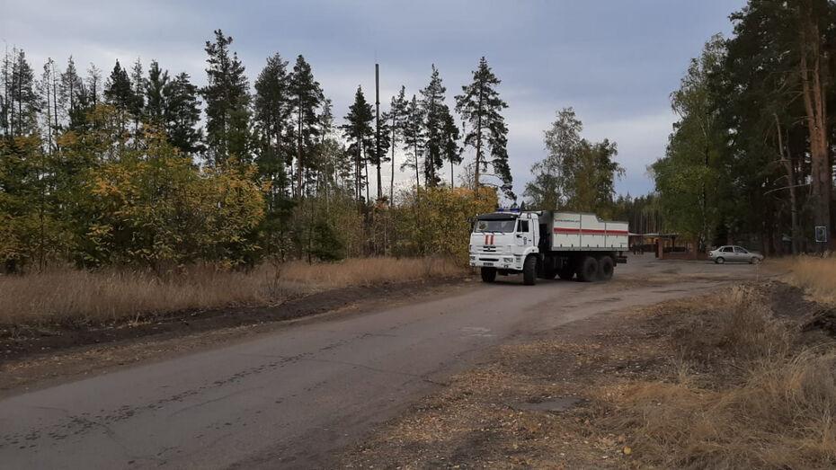Жителям Воронежской области на 3 недели запретили посещать леса