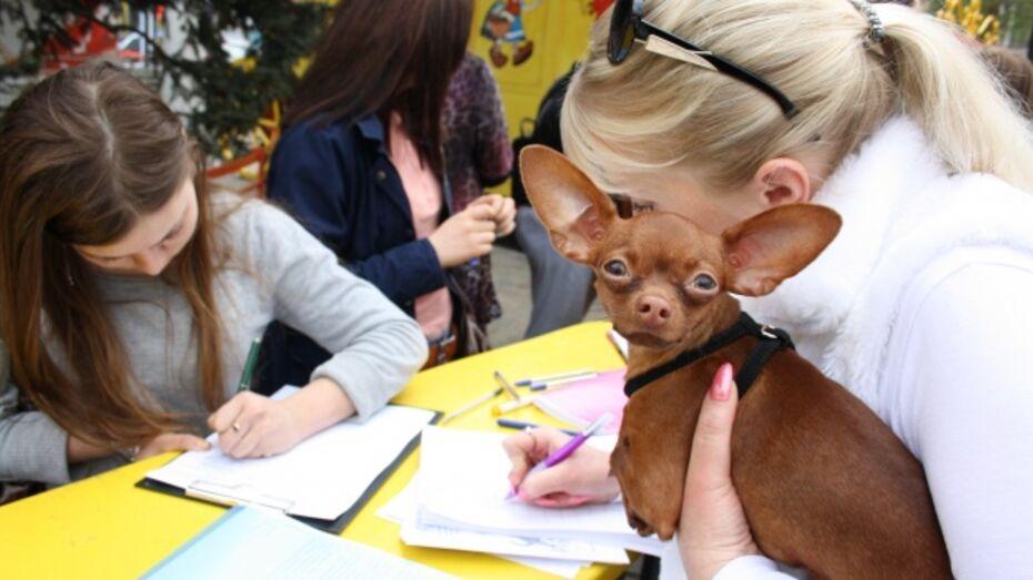 В Воронеже пройдет еще одна акция в защиту бездомных животных