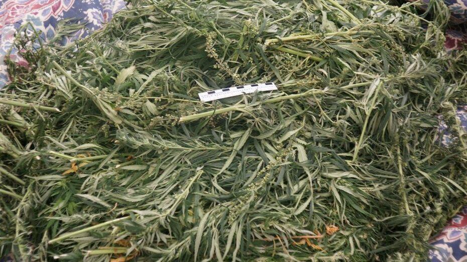 В Лисках за хранение марихуаны задержали белгородца