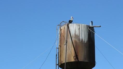 В  Новохоперском районе работники ЖКХ научились вить гнезда