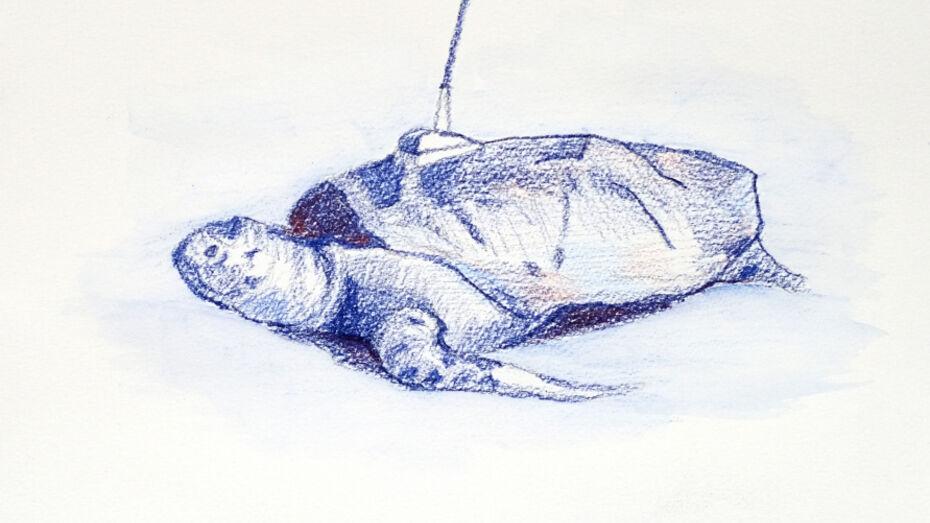 Новую выставку «Суставы» представит воронежский художник Николай Алексеев