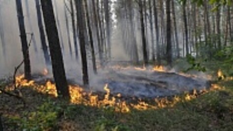 Особый противопожарный период в Воронежской области введут с 30 апреля