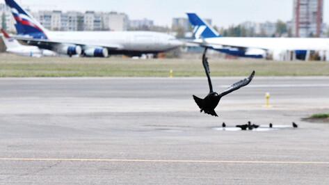 Росприроднадзор нашел в деятельности Воронежского авиазавода десятки нарушений