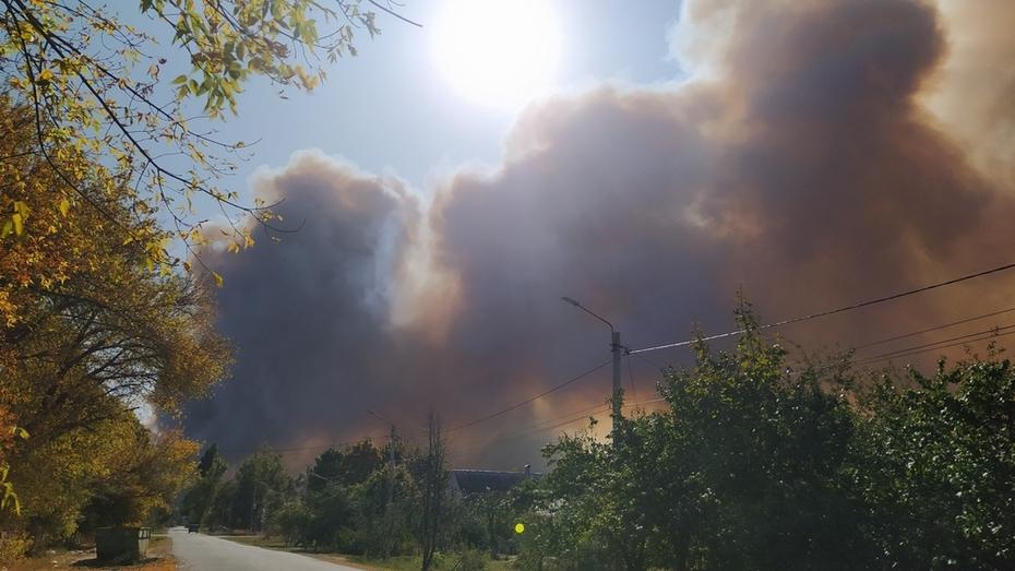 Лесники назвали пожар в Борисоглебске Воронежской области самым масштабным за 10 лет