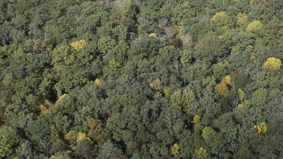Пропавшего в июле 36-летнего воронежца нашли мертвым в лесу