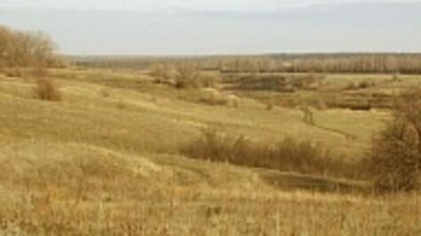 В Таловском районе прошедший июль стал самым засушливым за последние 120 лет