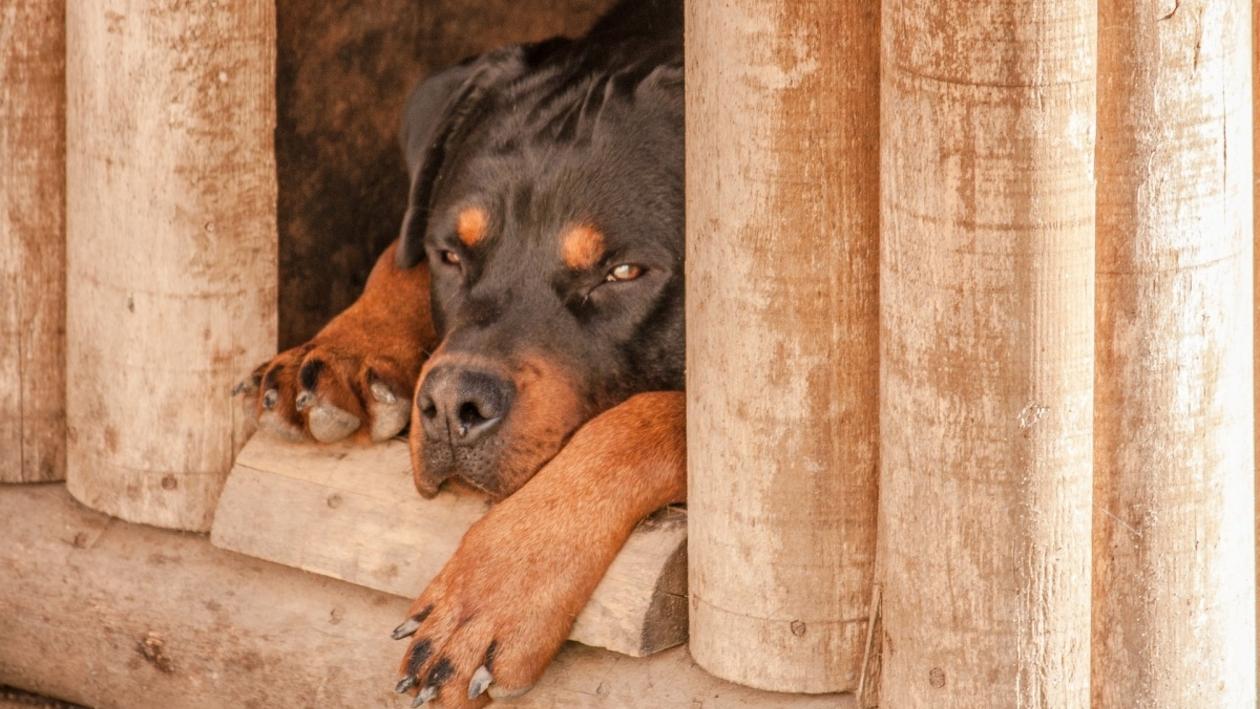 «Угрожал, что собака всех сожрет». Соседи – о хозяине напавшего на ребенка в Воронеже пса
