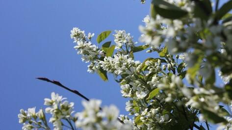 Последние выходные апреля в Воронеже будут солнечными и теплыми