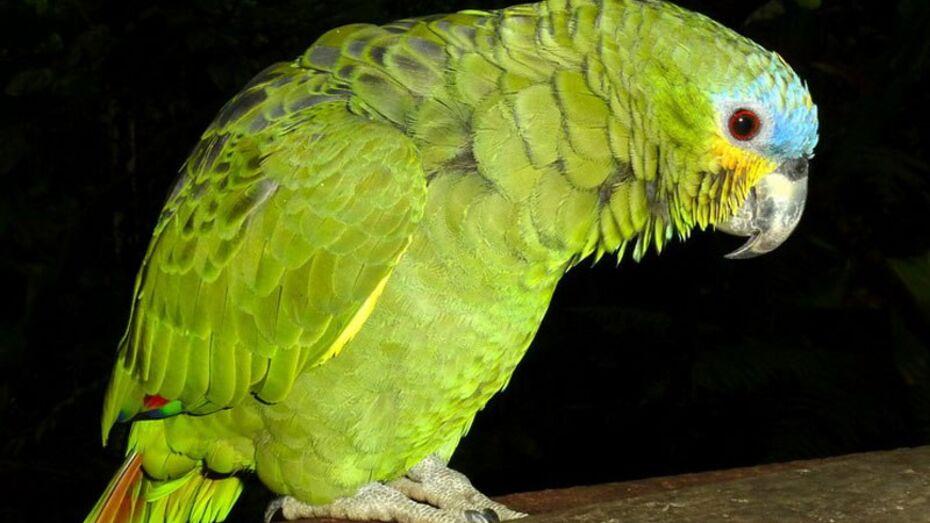Коллеги из других городов подарили Воронежскому зоопарку 30 птиц