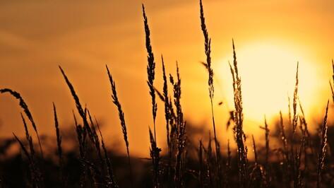 «Оранжевый» уровень погодной опасности зафиксировали в Воронежской области