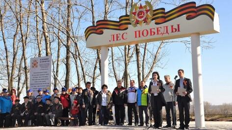 Воронежская область стала лучшей в реализации нацпроекта «Лес Победы»
