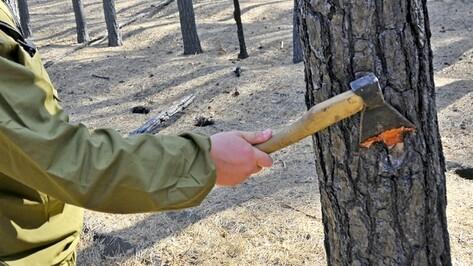 В Воронеже возбуждено уголовное дело по факту незаконной вырубки более 2 тысяч деревьев