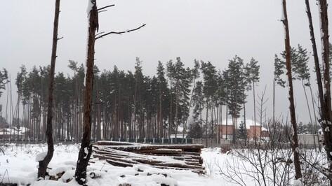 Леса под Воронежем получат статус особо охраняемой территории