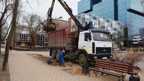 В центре Воронежа закончили вырубку «пылящих» тополей