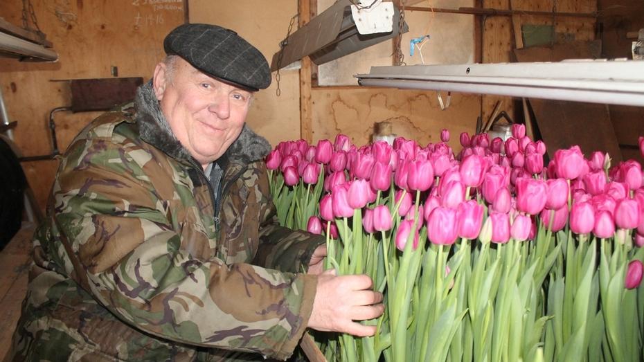Пенсионер из хохольского села вырастил тысячи разноцветных тюльпанов